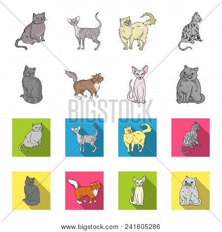 Sphinx, Nibelung, Norwegian Forest Cat And Other Species. Cat Breeds Set Collection Icons In Cartoon