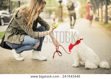 Playing with the dog