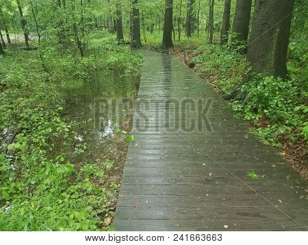 Wet Boardwalk Or Trail With Wet Green Leaves