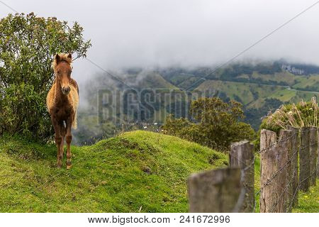Horse In Mountains, Fog Mountains, Lonely Horse, Colombia, Latin America