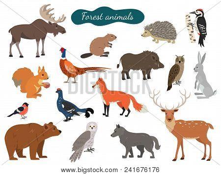 Set Of Forest Animals On White Background. Vector Illustration.