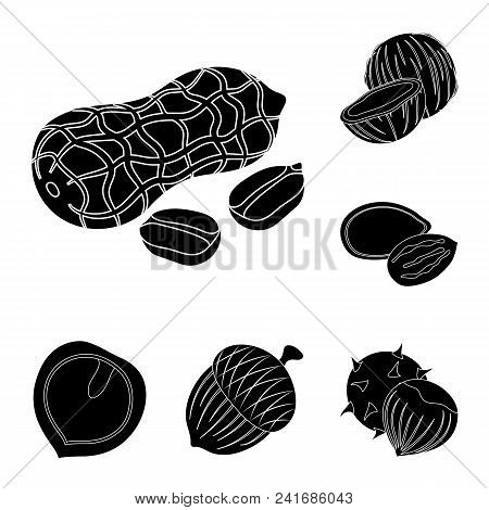 Different Kinds Of Nuts Black Icons In Set Collection For Design.nut Food Vector Symbol Stock  Illus