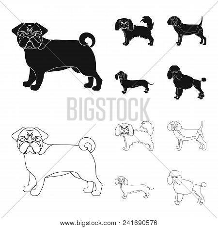 Dog Breeds Black, Outline Icons In Set Collection For Design.dog Pet Vector Symbol Stock  Illustrati