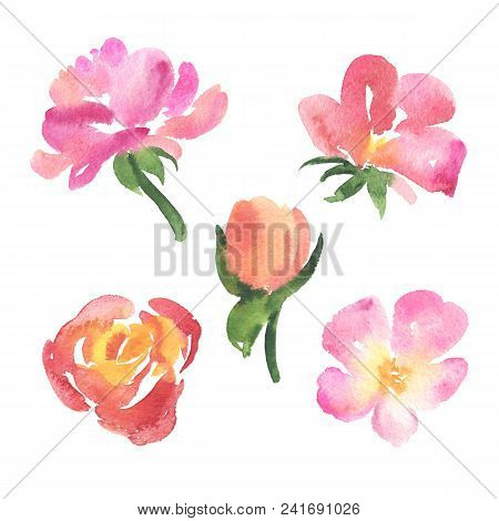 Set Of Sketch Style Watercolor Pink And Red Rose Flowers, Blooms, Blossoms Isolated On White Backgro