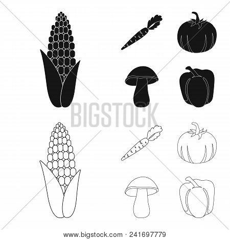 Corn Corn, Vitamin Carrots With Tops, Pumpkin, Forest Mushroom. Vegetables Set Collection Icons In B