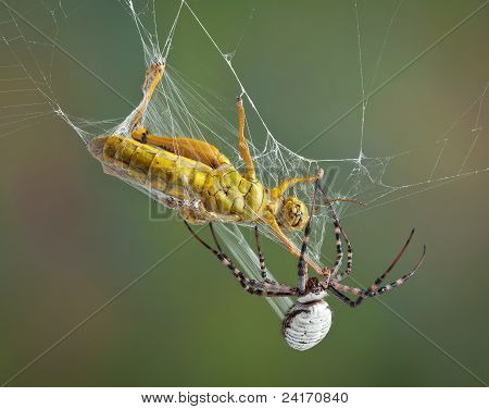 Spider Wrapping Hopper In Web