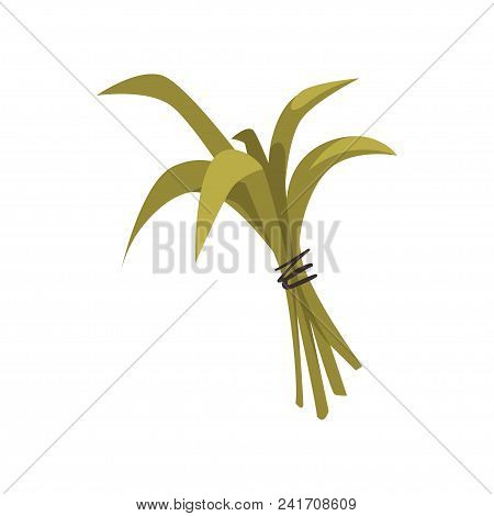 Bundle Of Green Bamboo Leaves Tied With Rope. Tropical Plant. Decorative Element For Promotional Bro