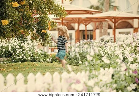 Child Childhood Children Happiness Concept. Childhood. Child Or Small Boy Outdoor In Garden With Flo