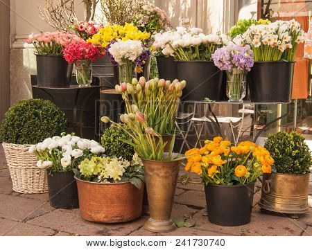 Colorful View On Many Species Of Flowers On The Ground And Table Outside Of A Shop