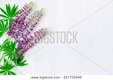 Lupine Flowers On The White Wooden Background. Selective Focus At The Lupine Flowers. Summer Backgro