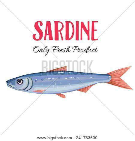 Vector Sardine. Icon Badge Fish For Design Seafood Packaging And Market.
