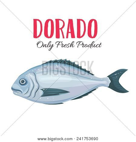 Vector Gilt-head Bream . Icon Badge Dorado Fish For Design Seafood Packaging And Market.
