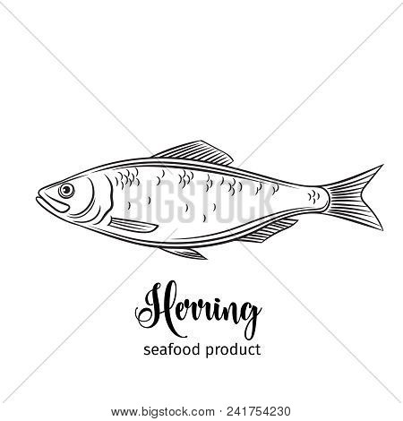 Vector Herring. Hand Drawn Icon Badge Fish For Design Seafood Packaging And Market.