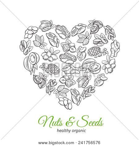 Poster Or Banner In Shape Of Heart With Hand Drawn Nuts And Seeds. Cola Nut, Pumpkin Seed, Peanut An