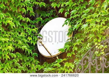 Satellite Dish Between The Branch Of The Trees, The Installation Of A Satellite Dish, Tv Communicati