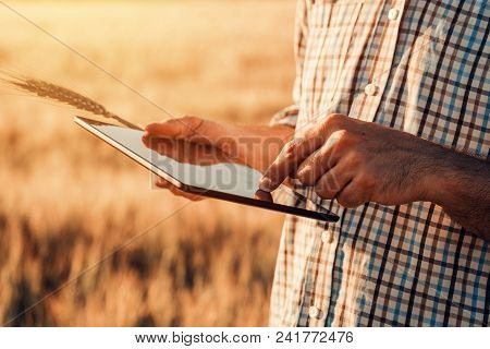 Smart Farming, Using Modern Technologies In Agriculture. Male Agronomist Farmer With Digital Tablet
