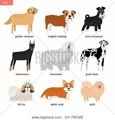 Dog Breeds. Vectors Dogs Breeding Collection Isolated On White Background, Great Dane And Komondor,