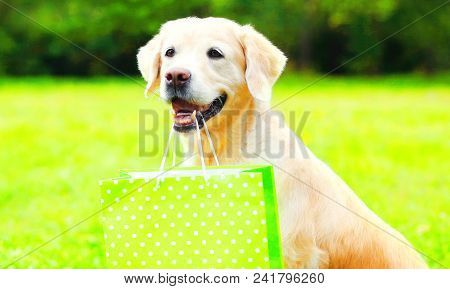 Golden Retriever Dog Is Holding A Green Shopping Bag In The Teeth On A Grass On A Summer Day