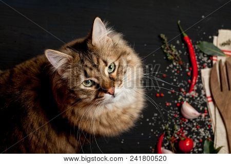 Cute Cat Making Mess On The Table