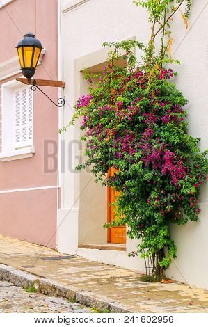 Close-up o a building with a street lamp and bougainvillea tree in Colonia del Sacramento, Uruguay. It is one of the oldest towns in Uruguay poster
