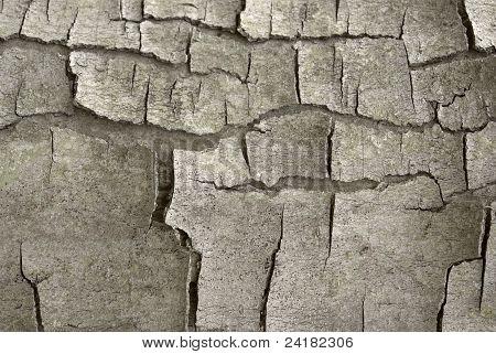 Cracked Bark Detail