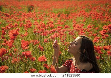 Sensual Woman. Opium Poppy, Youth, Freshness, Ecology, Woman. Summer, Spring, Poppy Flower. Drug, Op