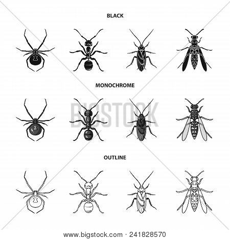 Spider, Ant, Wasp, Bee .insects Set Collection Icons In Black, Monochrome, Outline Style Vector Symb