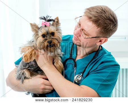 Veterinarian holding dog on hands at vet clinic