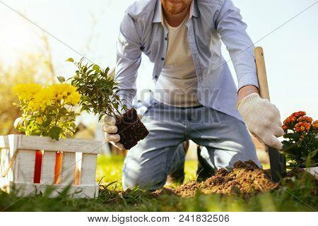 Professional Gardener. Nice Handsome Man Planting Flowers While Enjoying Gardening