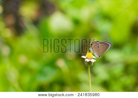 Small Yellow Flower, Beautiful Yellow Flower And Tiny Brown Butterfly Among A Beautiful Day In Blur