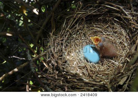 Baby Robin And Sibling