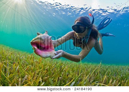 Snorkeler with a conch shell