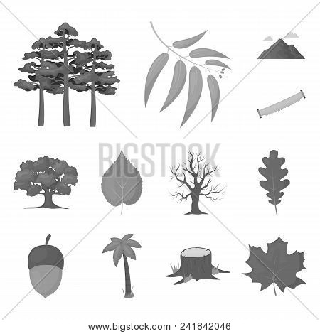 Forest And Nature Monochrome Icons In Set Collection For Design. Forest Life Vector Symbol Stock  Il