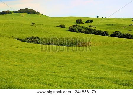 Lush Green Grasslands On Rolling Hills With Scattered Trees Taken In A Prairie