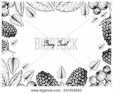 Tropical Fruits, Illustration Frame Of Hand Drawn Sketch Fresh Sweet Black Mulberries Or Morus  And