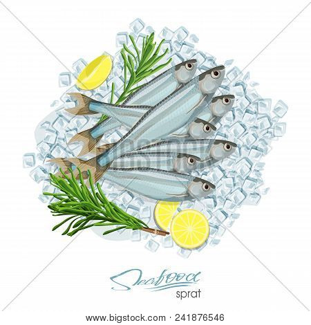 Sprat Sketch Vector Fish Icon. Isolated Marine Atlantic Ocean Sprats With Rosemary And Lemon On Ice