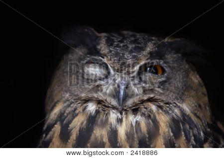 Shot (detail) of the head of eagle owl poster