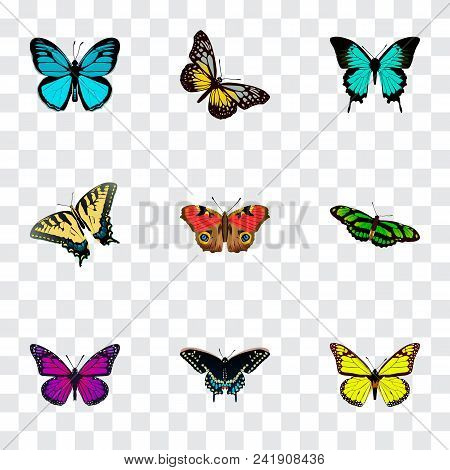 Set Of Moth Realistic Symbols With Yello-wing, Precis Almana, Butterfly And Other Icons For Your Web