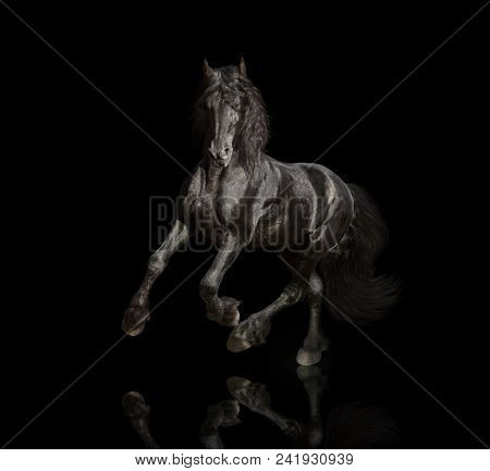 Big Black Friesian Horse Runs Isolated On The Black Background