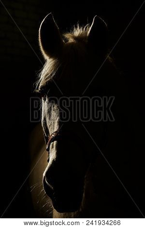 Portrait of horse in contour backlight on black background. Gelding in the night silhouette. poster