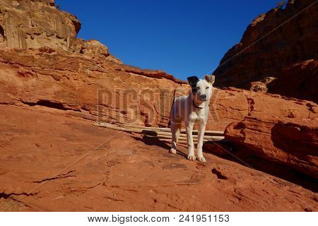 Dog In The Ancient City Of Petra, Unesco World Heritage Site, Jordan