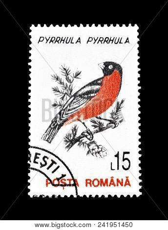 Romania - Circa 1993 : Cancelled Postage Stamp Printed By Romania, That Shows Eurasian Bullfinch.
