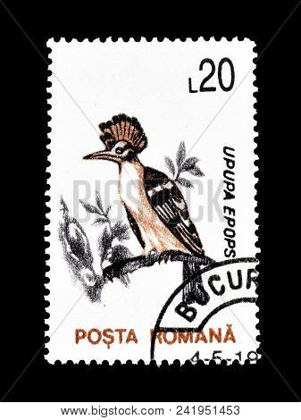 Romania - Circa 1993 : Cancelled Postage Stamp Printed By Romania, That Shows Eurasian Hoopoe.