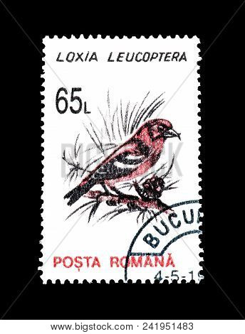 Romania - Circa 1993 : Cancelled Postage Stamp Printed By Romania, That Shows Two Barred Crossbill.