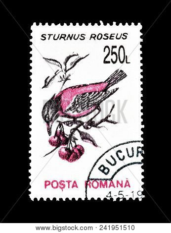 Romania - Circa 1993 : Cancelled Postage Stamp Printed By Romania, That Shows Rosy Starling.