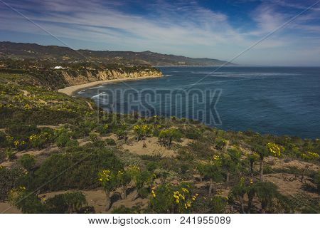 Beautiful Yellow Wildflowers Blooming And Covering Point Dume In Springtime With Coastline View Of D