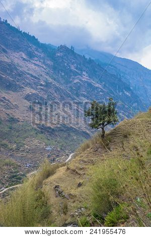 A Winding Tree On A Steep Slope In The Himalayas.