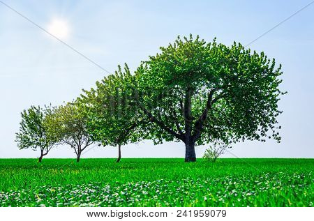 Beautifull Trees In A Field. Generation Growth Legacy Family Concept
