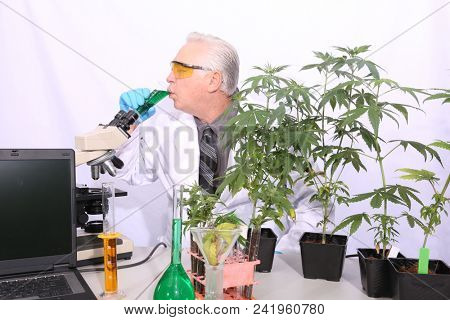 Cannabis and Marijuana Research Lab. Scientist researches Marijuana and Cannabis in a laboratory with microscopes, glass beakers, chemicals, computers, test tubes, and live plants.