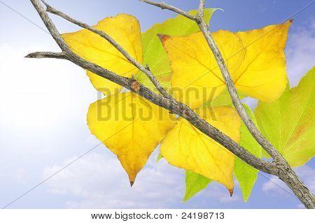 Tree In Fall.